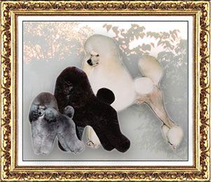 Poodles And Poodle Puppies Standards Miniatures And Toys