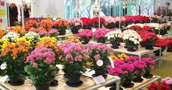 Mengenal Lebih Dalam Jenis Tanaman Hias Bunga Dan Ciri Cirinya