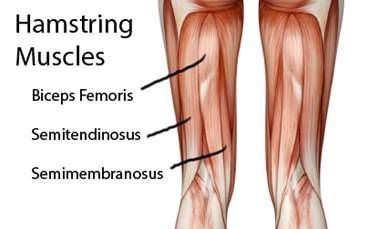 26++ The hamstring muscles all the leg ideas in 2021