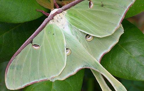 Weekend Wonders: Beautiful Butterflies and Moths of Georgia