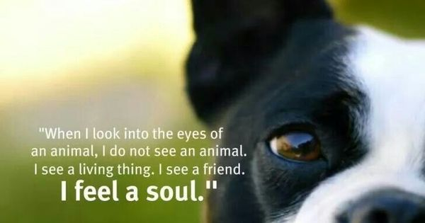 """When I Look Into The Eyes Of An Animal, I Do Not See An"