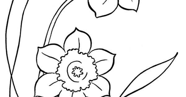 Free printable Spring color page for kids Daffodils