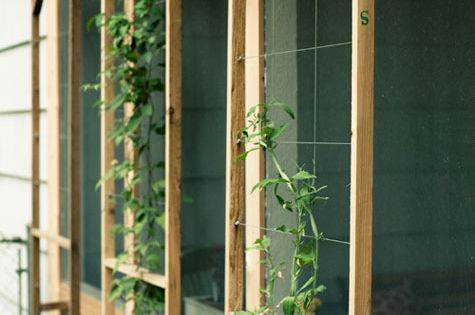 easy garden trellises vertical gardening ideas