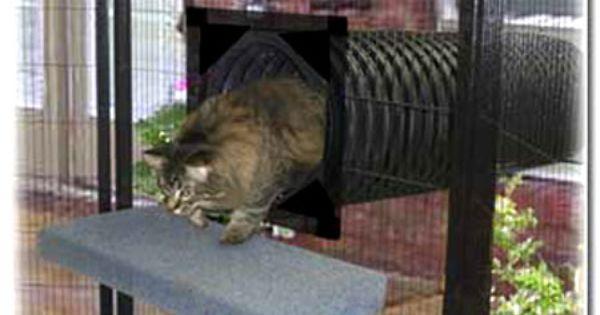 Outdoor Cat Enclosures How To Go From Patio To Catio Cat Fence Cat Enclosure Cat Habitat