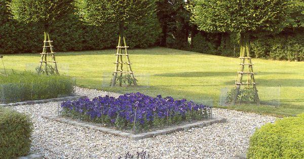 Interesting use of Carpinus Landscape Design by Miranda