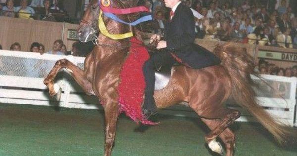 Ch Skywatch Saddlebred American Saddlebred Horses Saddlebred Show Horses