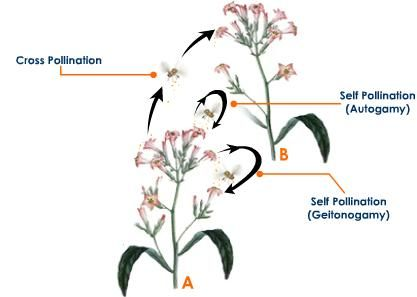 Autogamy 1 Pollination Biology Notes Longest Word In English
