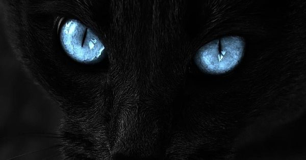 Cat's eyes pets animals blue