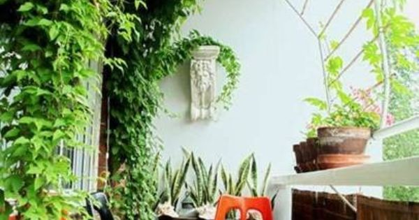 Use Plants Trained Onto Lattice To Provide Privacy On An