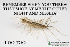 Get Rid Of Centipedes A K A Thousand Leggers Tomlinson Bomberger Pest Control Pest Control Humor Pest Control Roaches