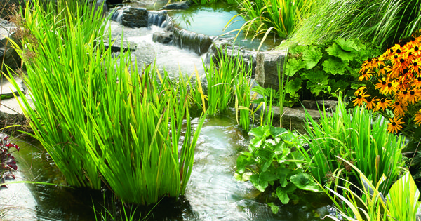 Like the idea to build a multi level pond feature so you for Koi pond hiding places