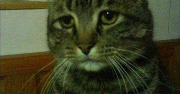 Funny cats - aawwwwww, kitty looks so sad