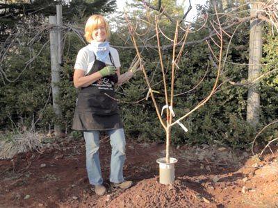 Plant A Bare Root Fruit Tree Fruit Trees Gardening Blog Organic Gardening