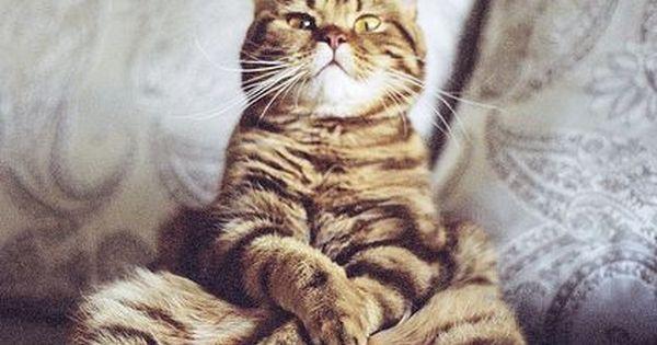 Cat - photo