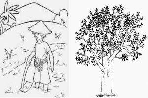 Contoh Dan Tips Soal Psikotes Dan Kunci Jawaban Dalam Memecahkan Psikotes Menggambar Pohon Draw A Tree Ini Dia Contoh Gambar Orang Gambar Menggambar Orang