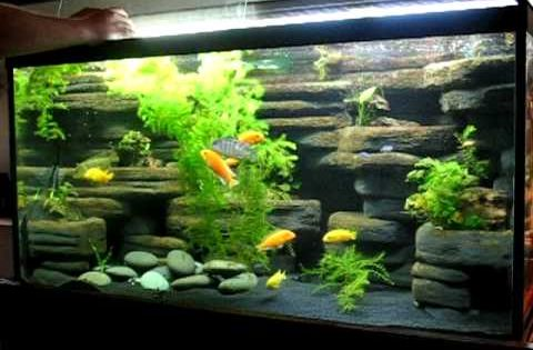 Diy aquarium background 90 gallon made from styrofoam for 10 gallon fish tank decoration ideas