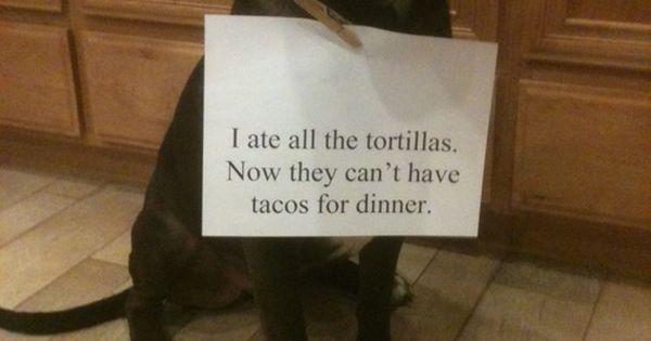 Pet shaming at its finest.