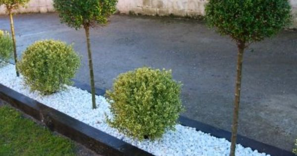 Piedra blanca seto rbol jardin pinterest setos for Jardines pequenos con piedras blancas