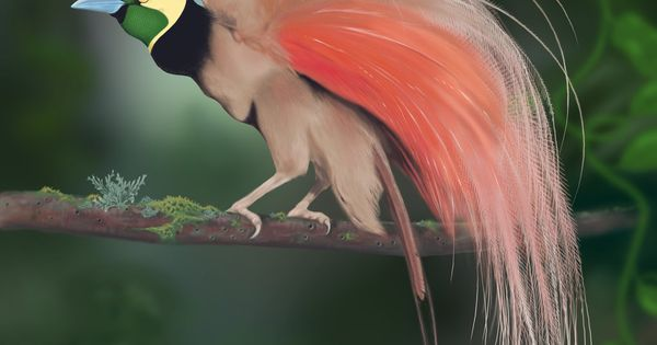 Tufted Coquette Hummingbird (Digital Painting) by ~Rick-Lilley on deviantART