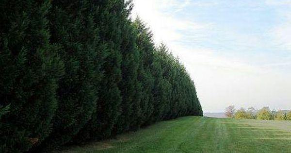 Trees as Sound Barrier | Gardening Outdoors | Pinterest