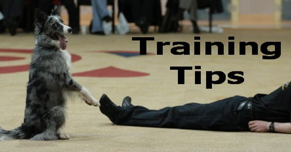 Training Tips For Canine Freestyle Or Heelwork To Music Canine