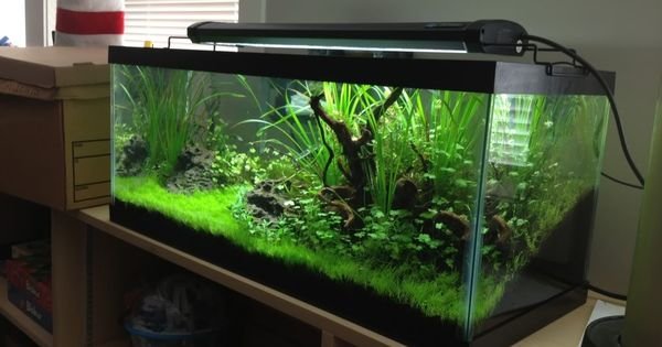 20 Gallon Long Google Search Fish Freshwater And
