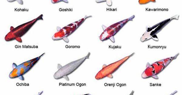 All types of koi fish koi chart tattoos pinterest for Koi variety chart
