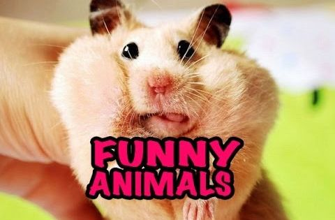 best funny animal videos compilation 2014 new hd just