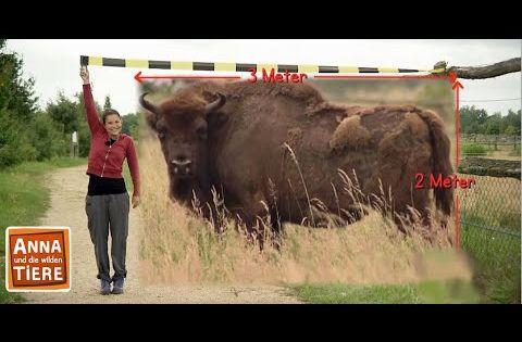 Anna Und Die Wilden Tiere Youtube In 2020 Wilde Tiere Tiere Anna
