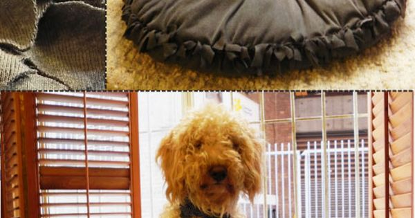 DIY NO SEW DOG BED! 10 DIY Pet Beds // DIY dog