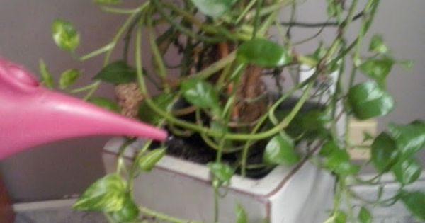 C mo recuperar la belleza de las plantas con agua for Recuperar agua piscina verde