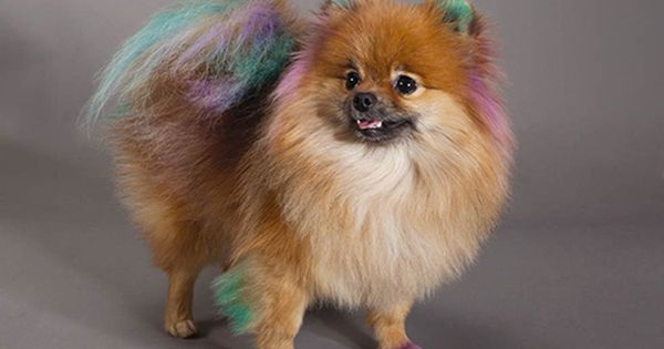 Dog Cat Grooming Services Petsmart Dog Groomers Pomeranian Hairstyles Dog Grooming