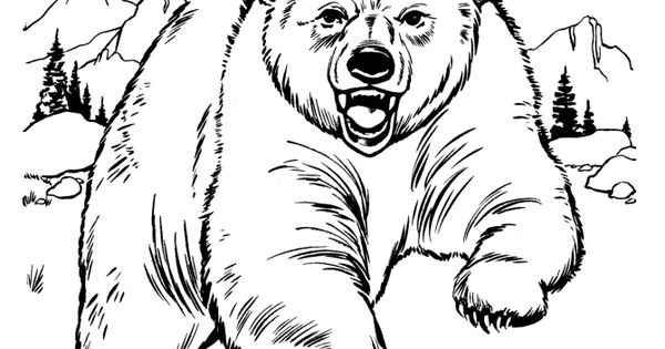 Drawings Of Wild Animals Animal Drawings Coloring Pages