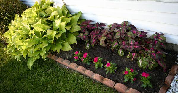 Perilla Quot Magilla Quot And Vinca Watch My Garden Grow