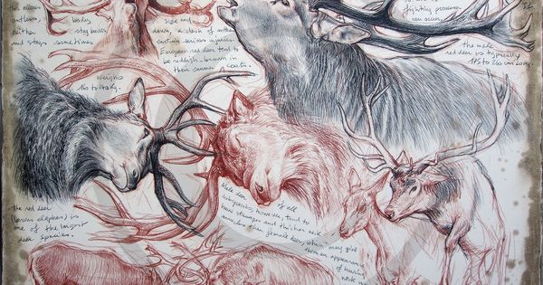 Oo marcello pettineo oo - Comment dessiner un cerf ...