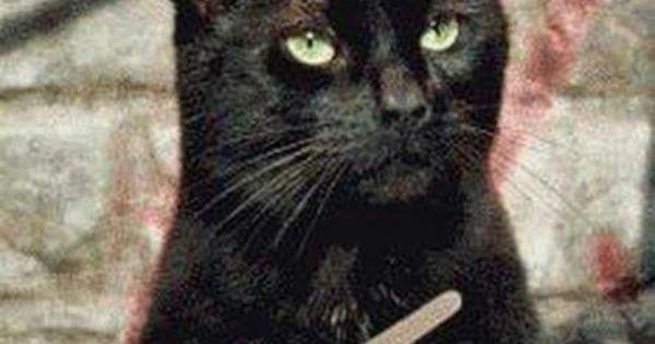 Attenzione al divano il gatto sta affilando le unghie