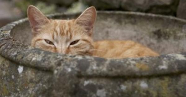 How To Get Rid Of Cat Pee Smell On Concrete Ehow Cat Pee Smell Cat Urine Smells Cat Urine