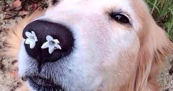 // enjoy this picture of a dog with flowers in its nose ...