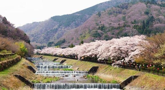 Sakura Japan Guide To Enjoy The Cherry Blossom Festival Spring 2021 Cherry Blossom Japan Japan Cherry Blossom Festival Cherry Blossom Festival