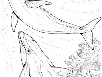 hard dolphin coloring pages - photo#22