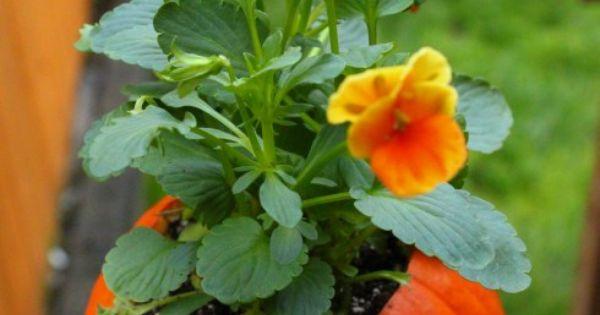Fall pumpkin flower pot for front porch