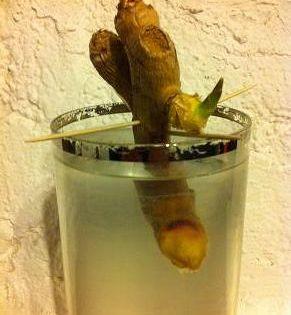 faire pousser du gingembre dans un verre d 39 eau du jardinage amusant avec le site caboucadin. Black Bedroom Furniture Sets. Home Design Ideas