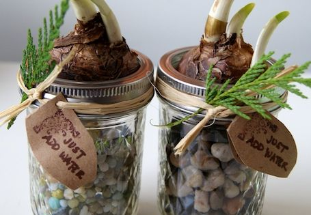 Paperwhite bulbs + mason jars + colorful stones= DIY Holiday Gifts