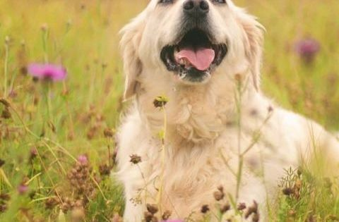 Pin Auf Deutschland Urlaub Mit Hund