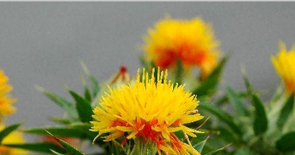 Pin By Ela Orlowicz On Zdrowie Plants Beauty Mela