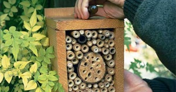 how to build a ladybug habitat