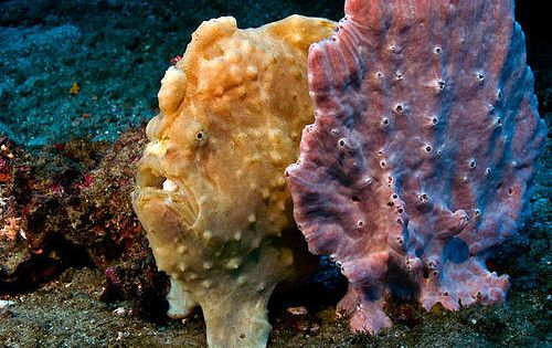 One of these animals is a sponge, the other is a fish…