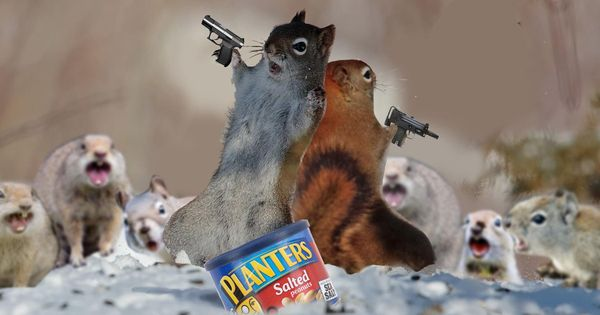 The 14 Best Photoshops Reddit Made Of These Two Funny Looking Squirrels Squirrel Funny Animals