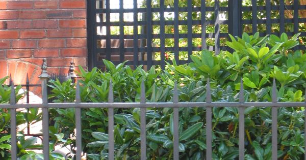 The Black Lattice Fence Could Be Nice Too With Greenery In Front Back Along The Grass And Drive