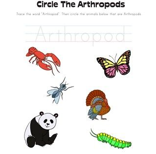 Circle The Arthropods Worksheet Arthropods Worksheets Color Worksheets For Preschool